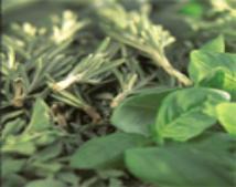Magickal Herbs